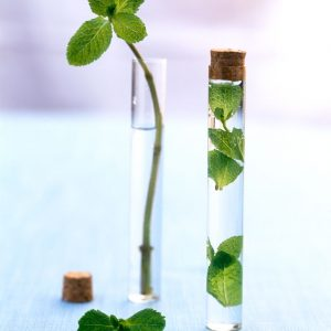 eau-florale-menthe